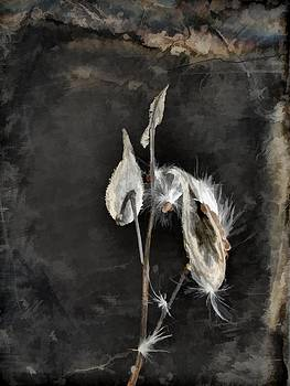Gothicrow Images - The Seeds Of Dark Nature