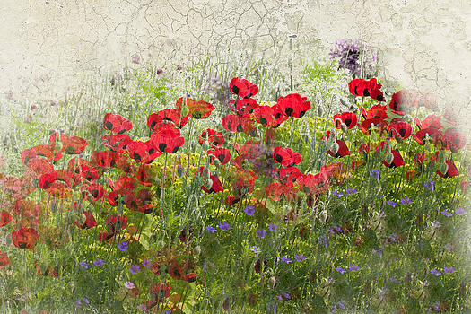 Grunge Poppy Field by Lesley Rigg