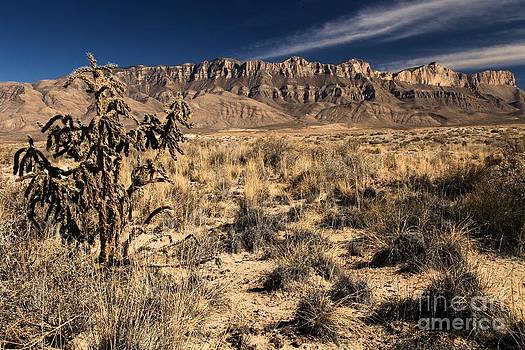 Adam Jewell - Guadalupe Landscape