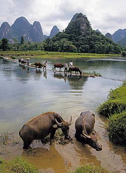 Dennis Cox - Guangxi crossing 3