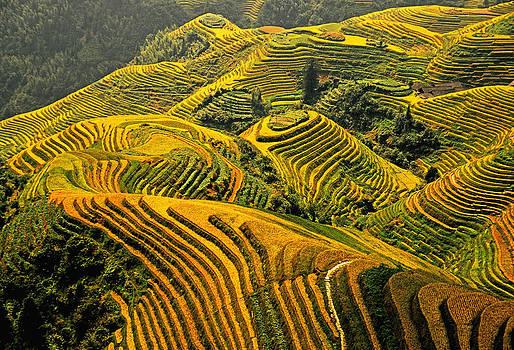 Dennis Cox - Guangxi rice terraces