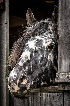 Guard Horse-What's the Password? by David Johnson