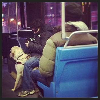 Guide Dogs Are Such Amazing by Caitlin Kunzle