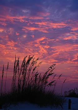 Gulf Coast Sunset  by Justyn  Lamb