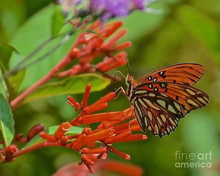 AnnaJo Vahle - Gulf Fritillary Butterfly