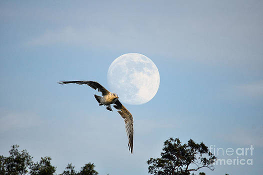Gull and Full Moon by Skye Ryan-Evans