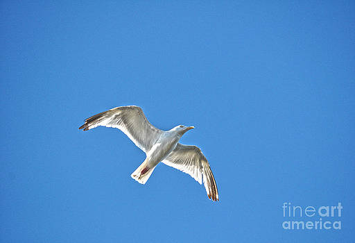 Gull and Sunlight by Skye Ryan-Evans