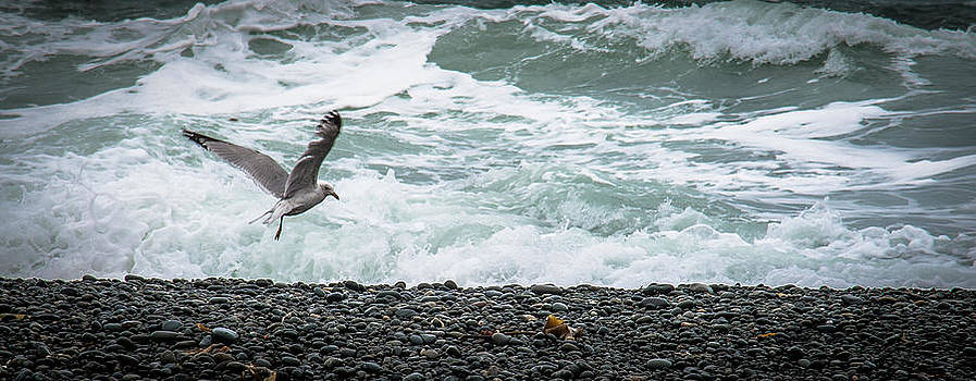 Gull and the Surf by David Pinsent