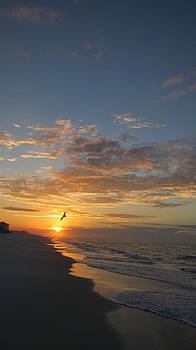 Gull at Sunrise by Denise   Hoff