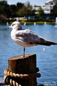 Gull by Christine May