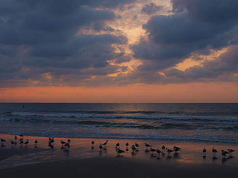 Gull Gathering - April Dawn by Kathleen Palermo