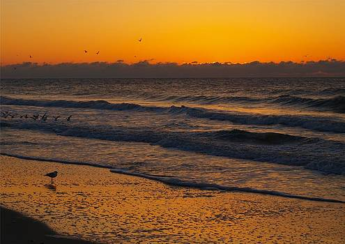 Gull in the Dawn Glow  by Kathleen Palermo
