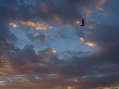 Gull in the Dawn Sky by Kathleen Palermo