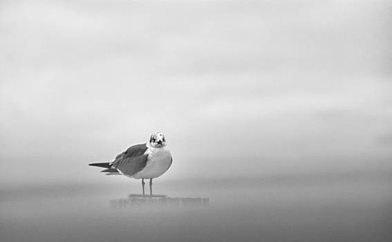 Gull in the mist by Venancio Lasso