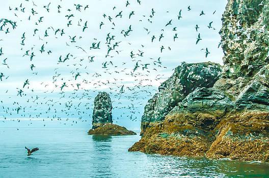 Debra  Miller - Gull Island