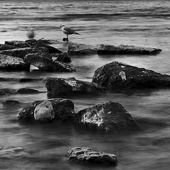 Gull Rock by Rod Sterling