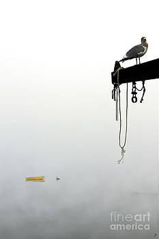 Brenda Giasson - Gull Watch II