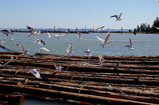 Gulls aloft on inventory by Christine Burdine