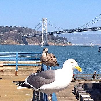 Gulls At The Ferry Building Beside The by Karen Winokan