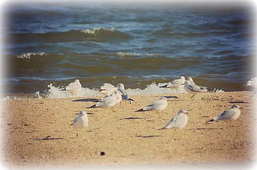 Gulls at the Polar Plunge by Sheila Noren