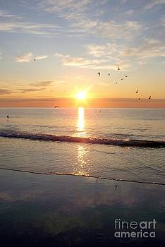 Gulls Dance In The Warmth Of The New Day by Eunice Miller