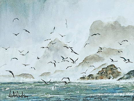 Gulls in the Mist by Bill Hudson
