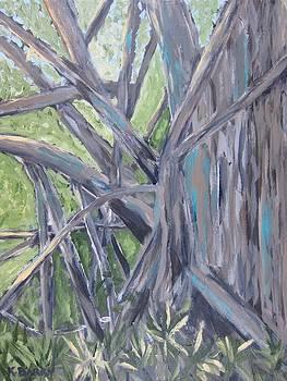 Gumbo Limbo Park Banyan Tree by Kathryn Barry