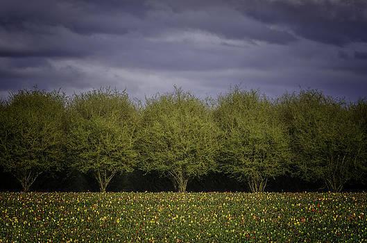 Gumdrop Field by Chris Malone