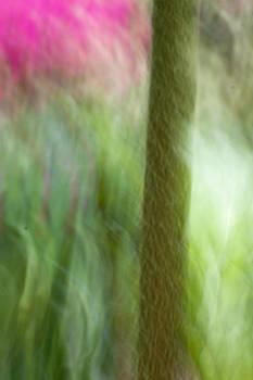Gunnera Abstract by Matthew Bruce