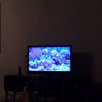Guys Aquarium For Your Home Is Now On by Mychal Clements