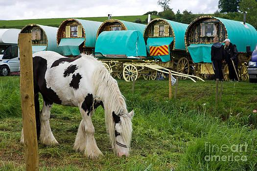 Liz  Alderdice - Gypsy Cob and Wagons