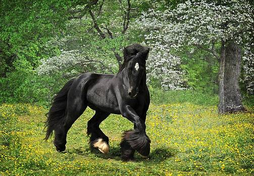 Gypsy Stallion Shadow by Fran J Scott