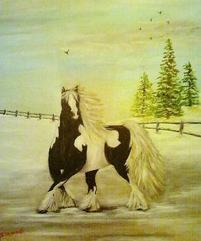 Gypsy Vanner by Nancy Stewart
