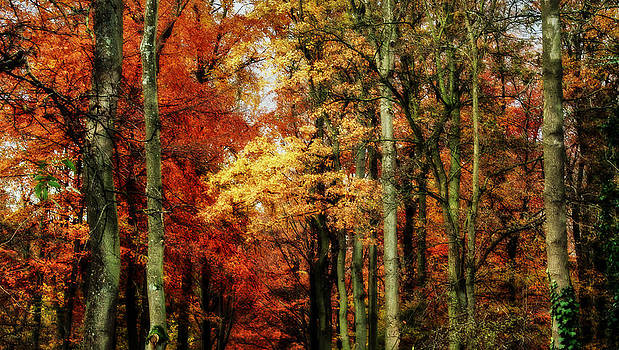 Haagse Bos - The Hague Woods by Yvonne Gallagher