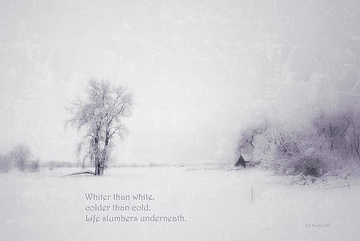 Haiku - Snow by Eneida Gastal-Keith