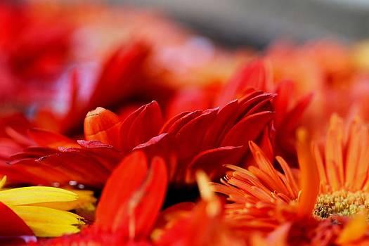 Ramabhadran Thirupattur - Hall of Flame