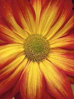 Jennifer Lamanca Kaufman - Halloween Flower