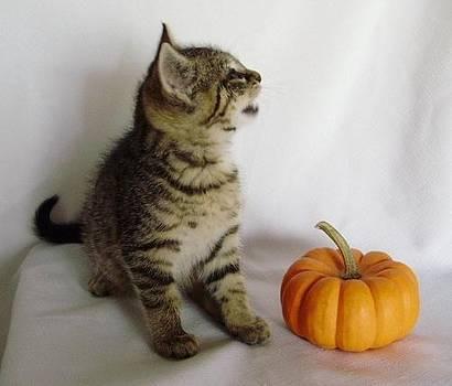 Halloween Howler by Joann Renner