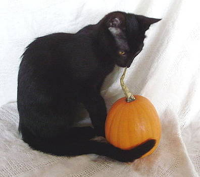 Halloween Kitty by Joann Renner