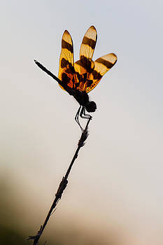 Halloween Pennant Dragonfly Glow by Ed Gleichman