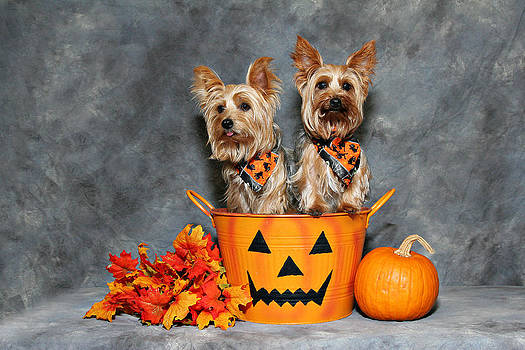 Halloween Yorkies #2 by John Rockwood