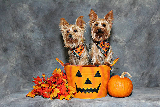Halloween Yorkies by John Rockwood