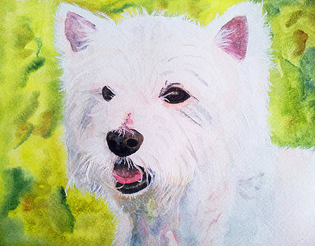 Hamish by Louise Grant