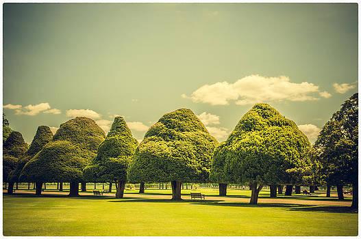 Lenny Carter - Hampton Court Palace Gardens Triangular Trees