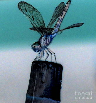 Unique Dragonfly by Eunice Miller