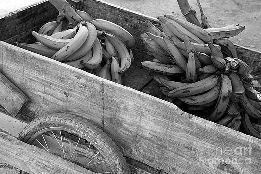 Sophie Vigneault - Handcart and Bananas