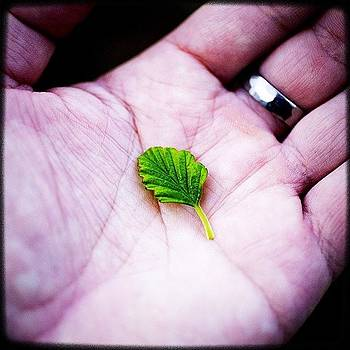 Handle Even A Single Leaf Of Green In by Kevin Smith