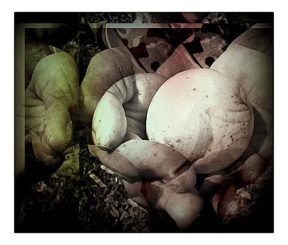 Hands by Raquel Ventura