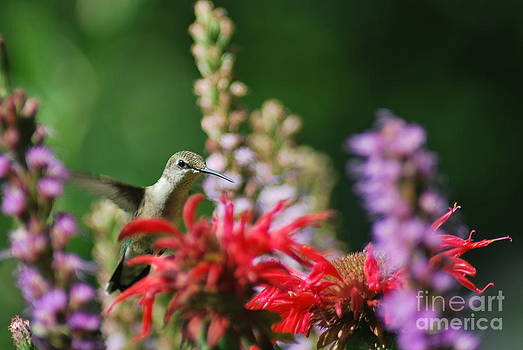 Hanging at the Bee Balm Cafe by Terri Oberg