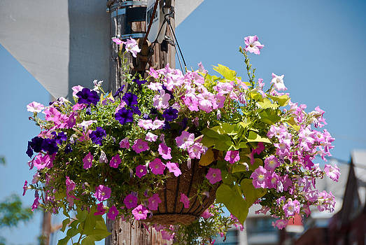 Hanging Basket by Nickaleen Neff